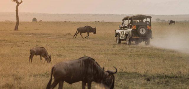 Bush & Safari